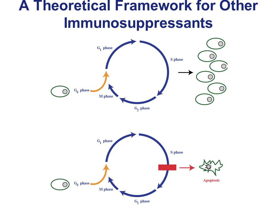 A Theoretical Framework for Other Immunosuppressants