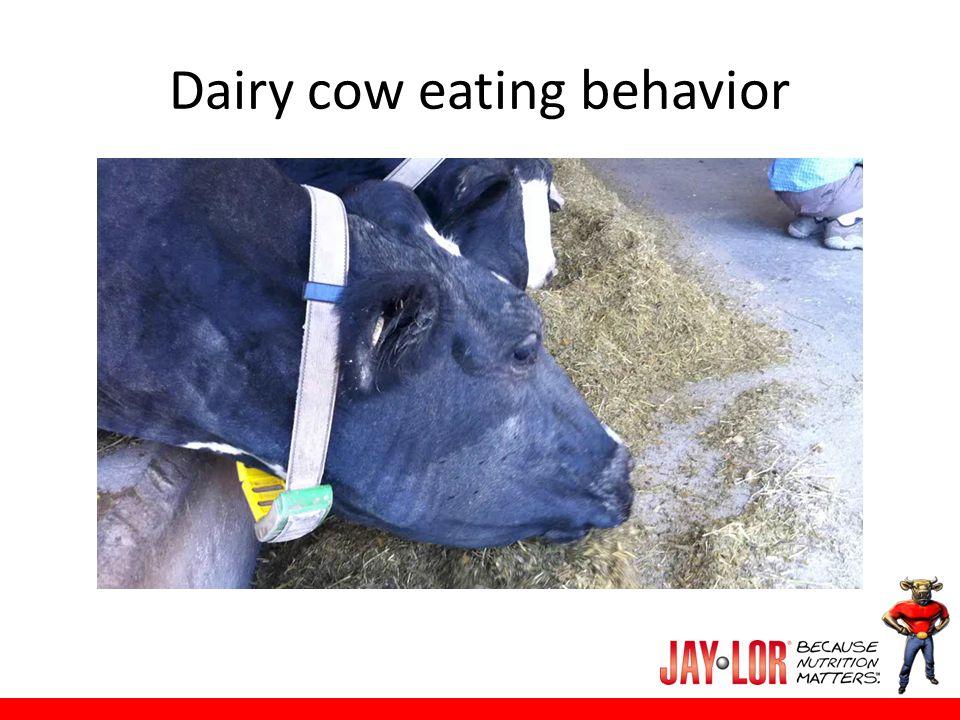 Streigel 4575: Beef Ration