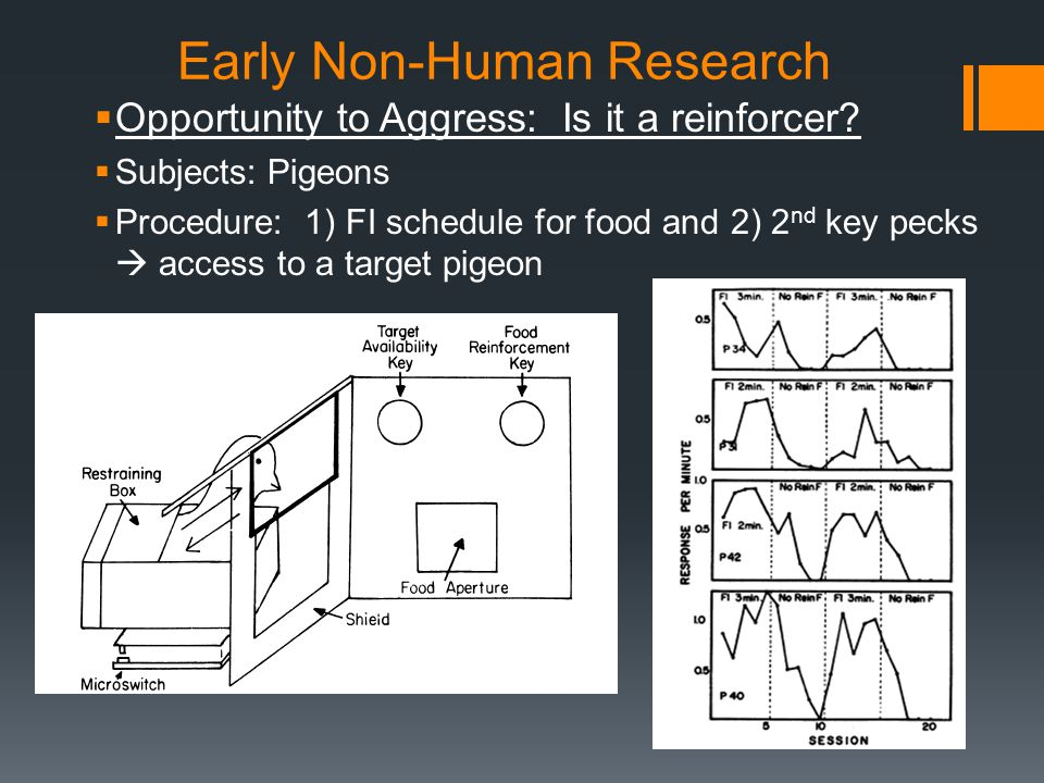 Early Non-Human Research  Opportunity to Aggress: Is it a reinforcer.