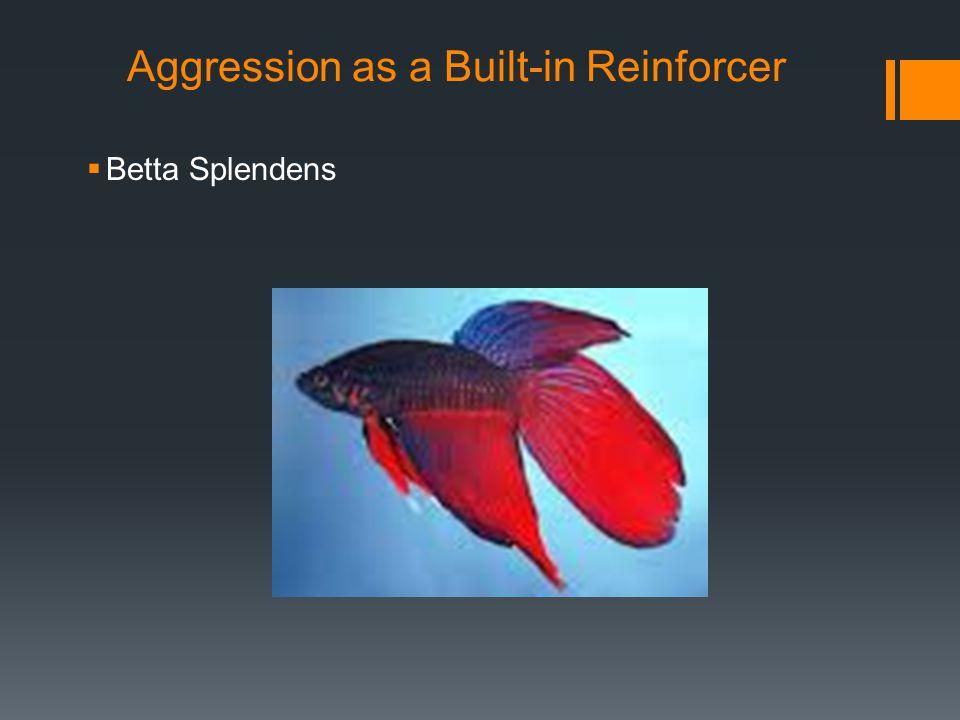 Aggression as a Built-in Reinforcer  Betta Splendens