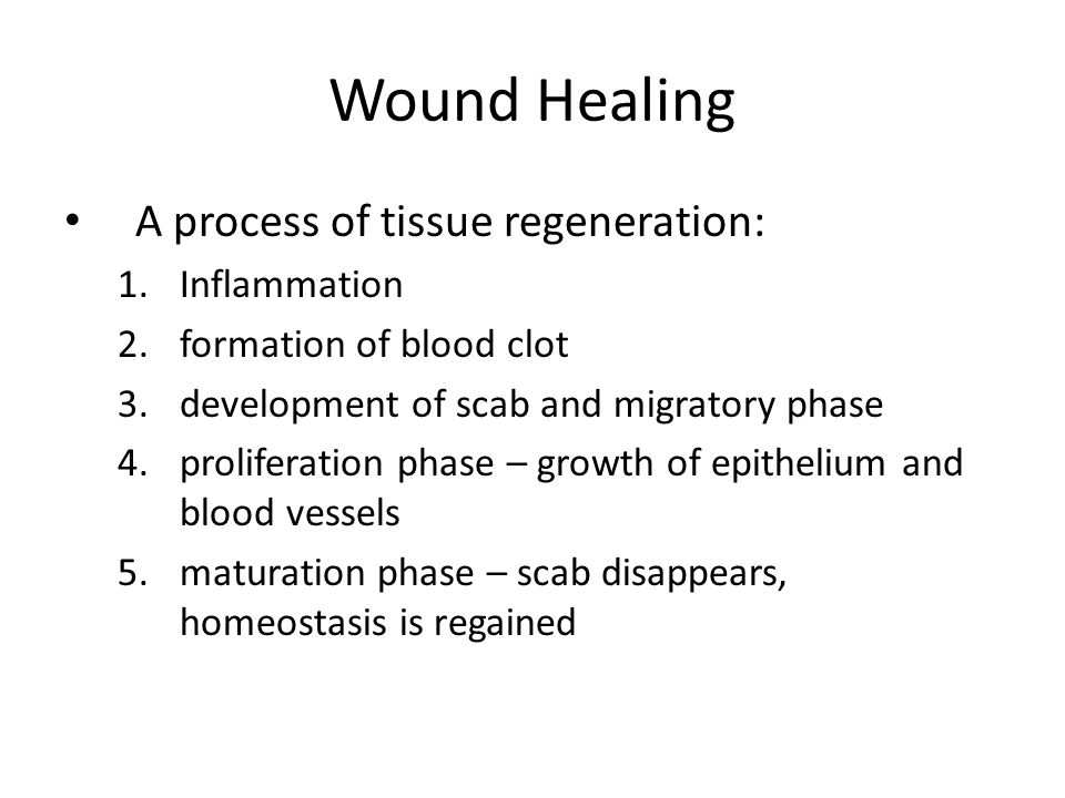 Wound Healing A process of tissue regeneration: 1.Inflammation 2.formation of blood clot 3.development of scab and migratory phase 4.proliferation phase – growth of epithelium and blood vessels 5.maturation phase – scab disappears, homeostasis is regained