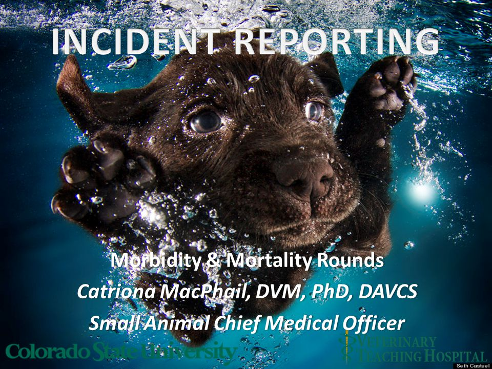 Morbidity & Mortality RoundsMorbidity & Mortality Rounds Catriona MacPhail, DVM, PhD, DAVCSCatriona MacPhail, DVM, PhD, DAVCS Small Animal Chief Medical OfficerSmall Animal Chief Medical Officer