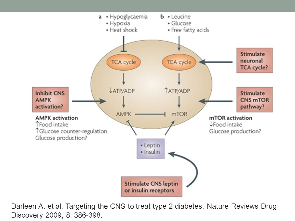 Darleen A. et al. Targeting the CNS to treat type 2 diabetes.