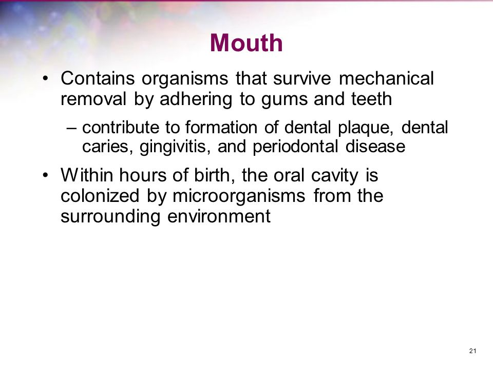 Mouth Contains organisms that survive mechanical removal by adhering to gums and teeth –contribute to formation of dental plaque, dental caries, gingivitis, and periodontal disease Within hours of birth, the oral cavity is colonized by microorganisms from the surrounding environment 21