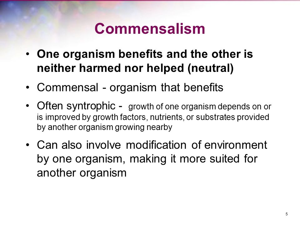 Commensalism One organism benefits and the other is neither harmed nor helped (neutral) Commensal - organism that benefits Often syntrophic - growth o