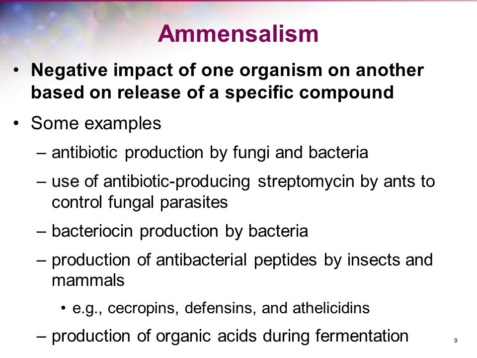Ammensalism Negative impact of one organism on another based on release of a specific compound Some examples –antibiotic production by fungi and bacteria –use of antibiotic-producing streptomycin by ants to control fungal parasites –bacteriocin production by bacteria –production of antibacterial peptides by insects and mammals e.g., cecropins, defensins, and athelicidins –production of organic acids during fermentation 9