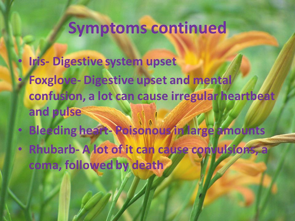 Symptoms continued Iris- Digestive system upset Foxglove- Digestive upset and mental confusion, a lot can cause irregular heartbeat and pulse Bleeding