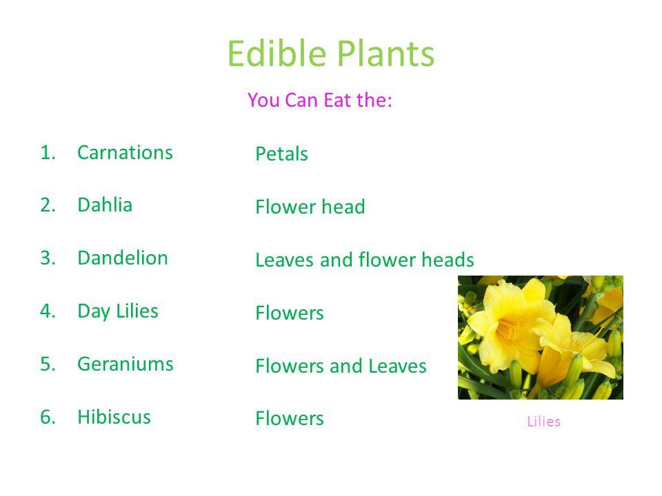 Edible Plants 1.Carnations 2.Dahlia 3.Dandelion 4.Day Lilies 5.Geraniums 6.Hibiscus Petals Flower head Leaves and flower heads Flowers Flowers and Lea