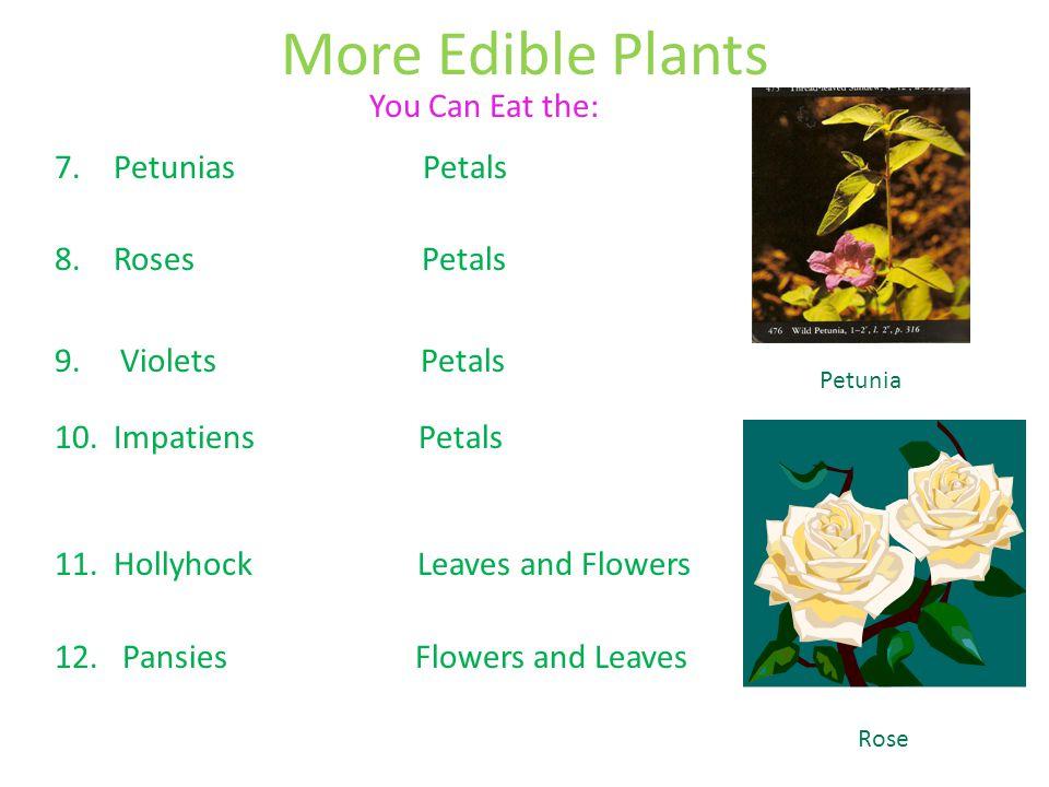 More Edible Plants 7.Petunias Petals 8.Roses Petals 9. Violets Petals 10.Impatiens Petals 11.Hollyhock Leaves and Flowers 12. Pansies Flowers and Leav