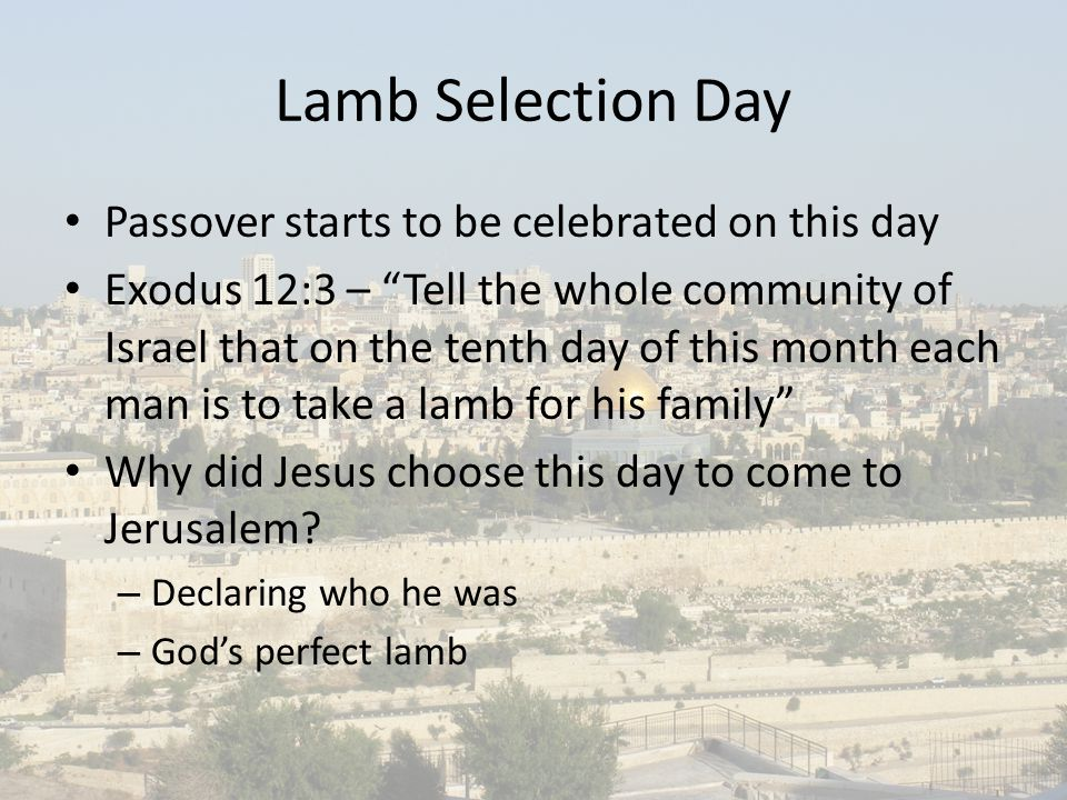 Lamb Selection Day Passover starts to be celebrated on this day Exodus 12:3 – Tell the whole community of Israel that on the tenth day of this month each man is to take a lamb for his family Why did Jesus choose this day to come to Jerusalem.
