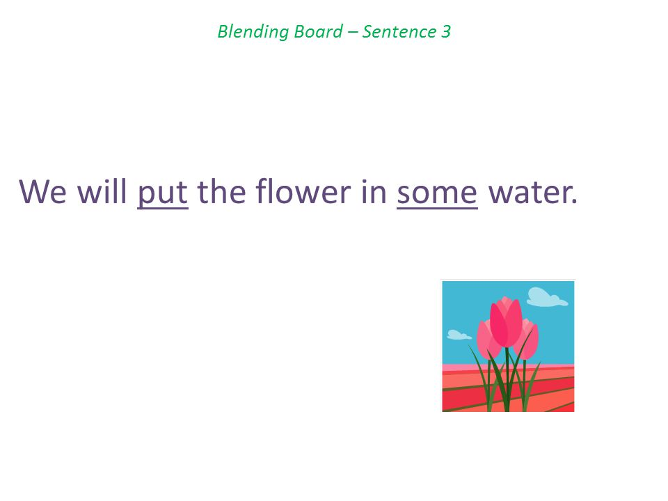 Blending Board – Sentence 3 We will put the flower in some water.