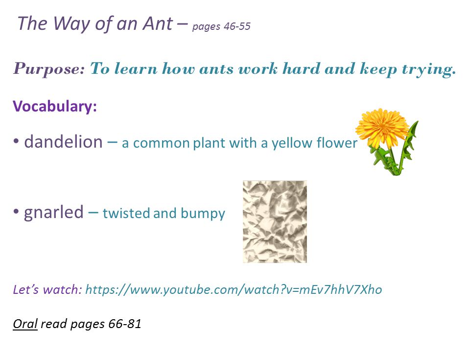 The Way of an Ant – pages 46-55 Purpose: To learn how ants work hard and keep trying.