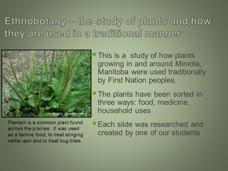  This is a study of how plants growing in and around Miniota, Manitoba were used traditionally by First Nation peoples.