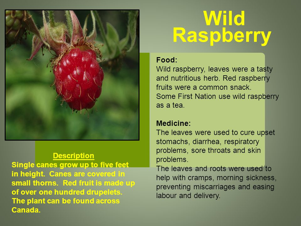 Wild Raspberry Description Single canes grow up to five feet in height.