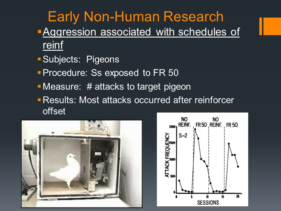 Early Non-Human Research  Aggression associated with schedules of reinf  Subjects: Pigeons  Procedure: Ss exposed to FR 50  Measure: # attacks to