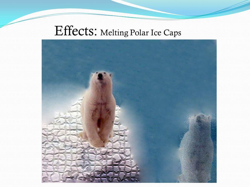 Effects: Melting Polar Ice Caps