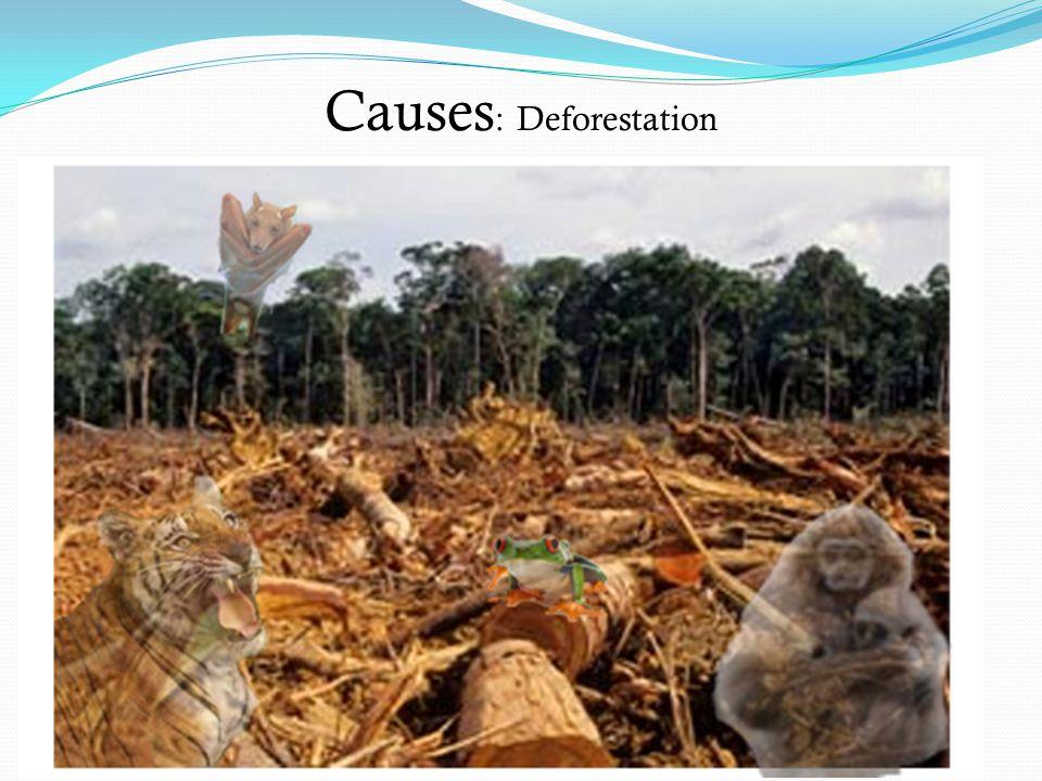 Causes : Deforestation
