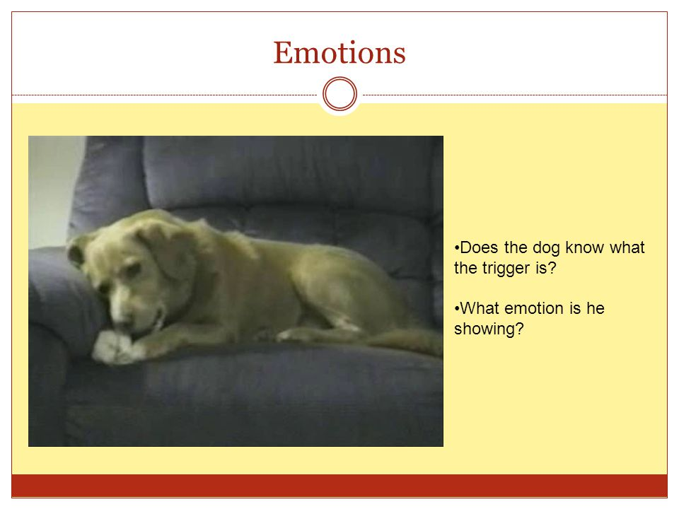 Emotions Does the dog know what the trigger is? What emotion is he showing?
