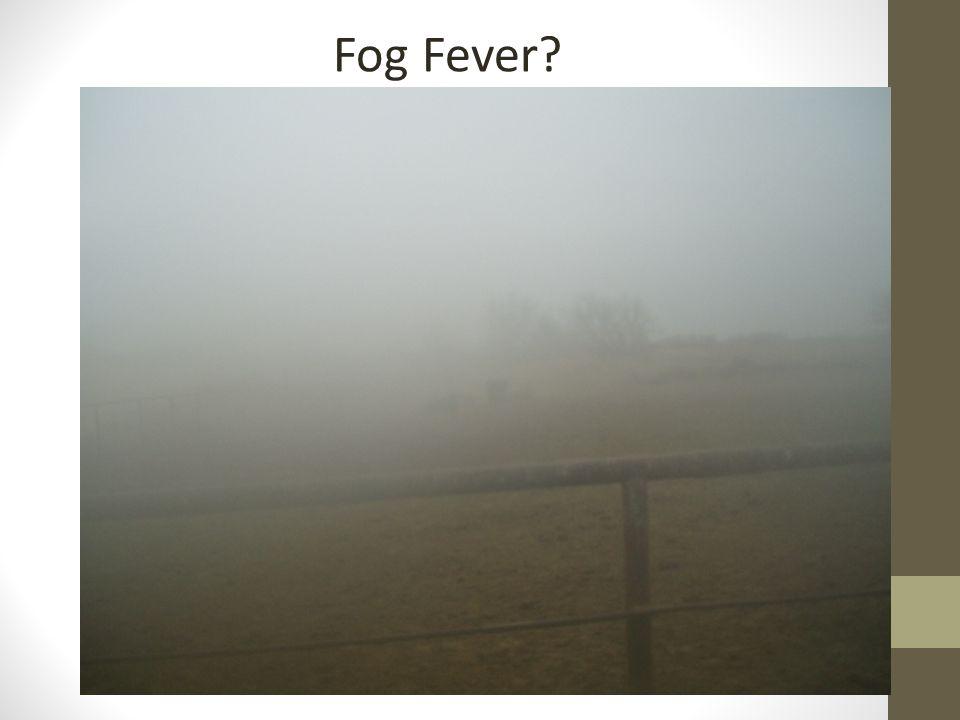 Fog Fever?