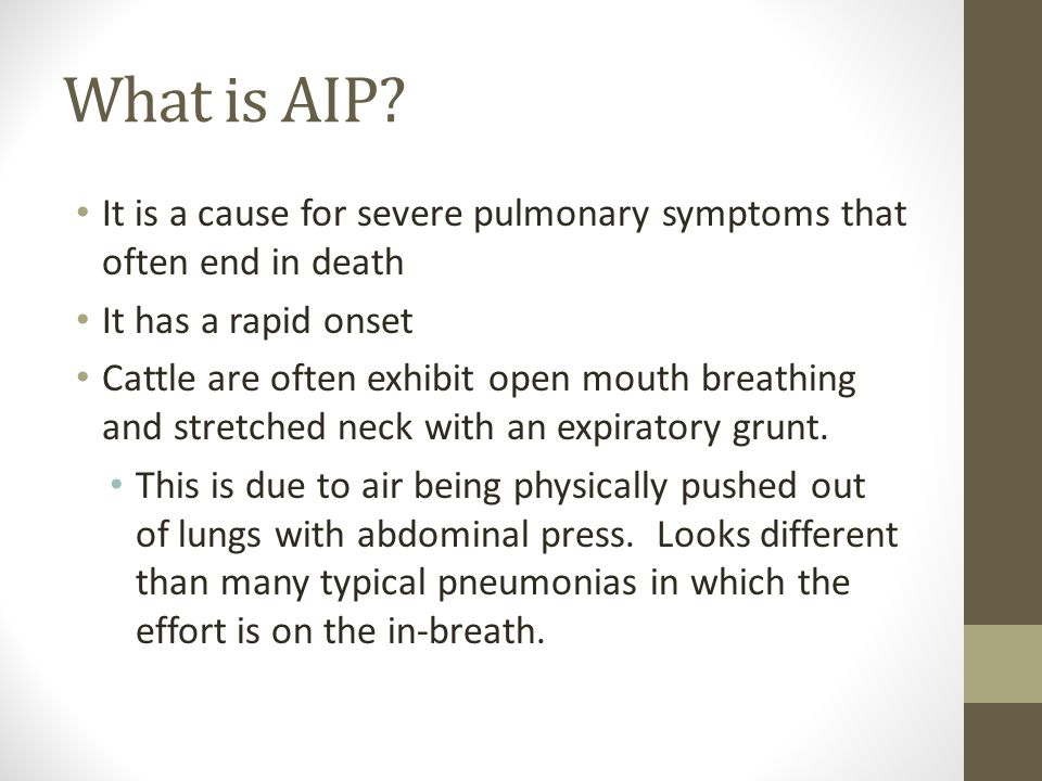 What is AIP? It is a cause for severe pulmonary symptoms that often end in death It has a rapid onset Cattle are often exhibit open mouth breathing an