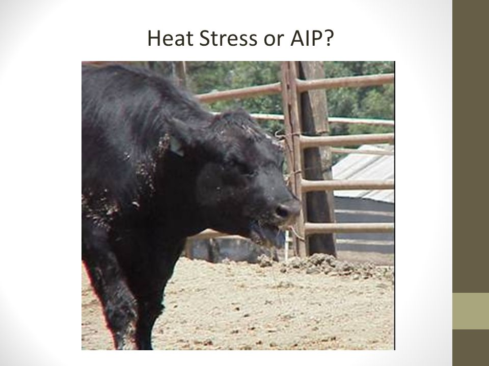 Heat Stress or AIP?