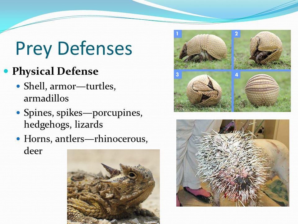 Prey Defenses Physical Defense Shell, armor—turtles, armadillos Spines, spikes—porcupines, hedgehogs, lizards Horns, antlers—rhinocerous, deer