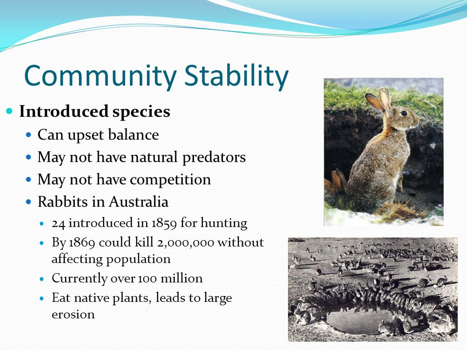 Community Stability Introduced species Can upset balance May not have natural predators May not have competition Rabbits in Australia 24 introduced in 1859 for hunting By 1869 could kill 2,000,000 without affecting population Currently over 100 million Eat native plants, leads to large erosion