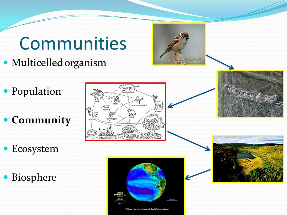 Multicelled organism Population Community Ecosystem Biosphere Communities