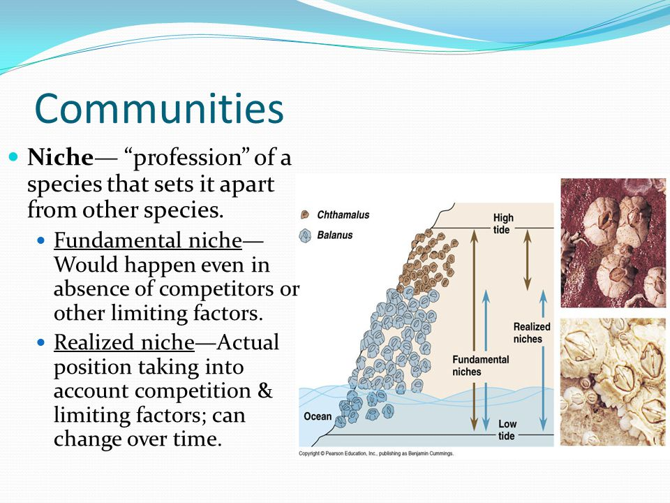 Communities Niche— profession of a species that sets it apart from other species.