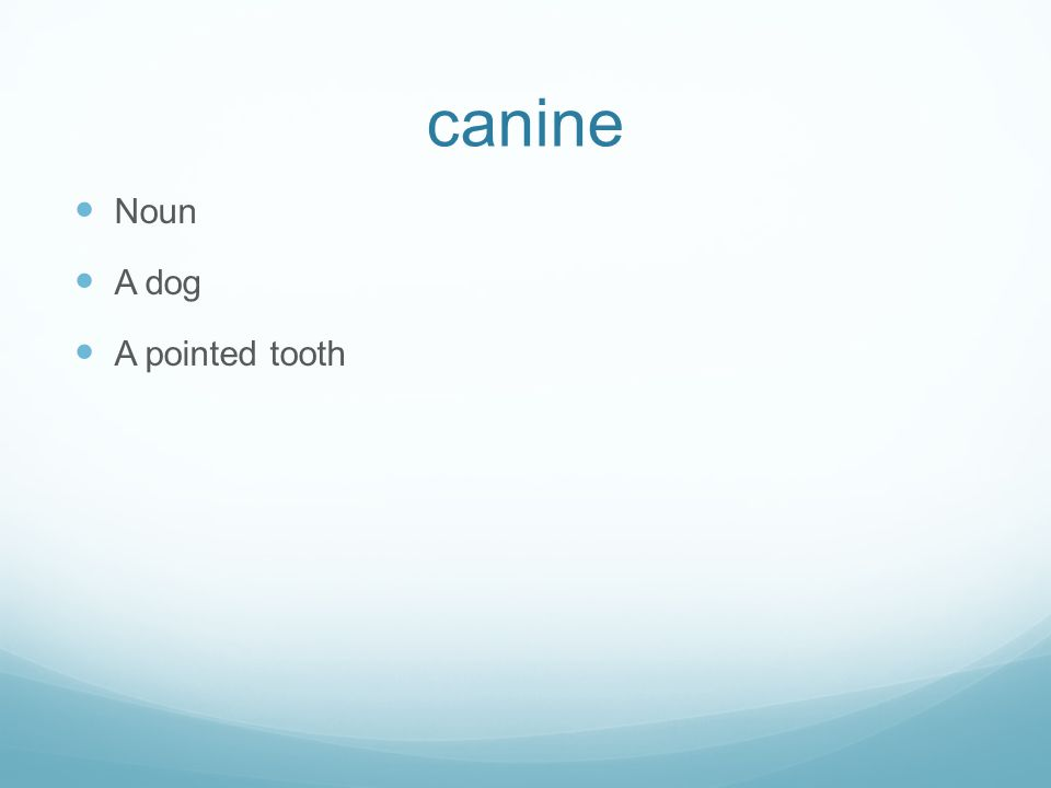 canine Noun A dog A pointed tooth