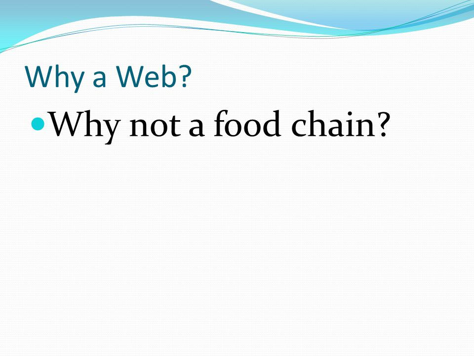 Why a Web? Why not a food chain?