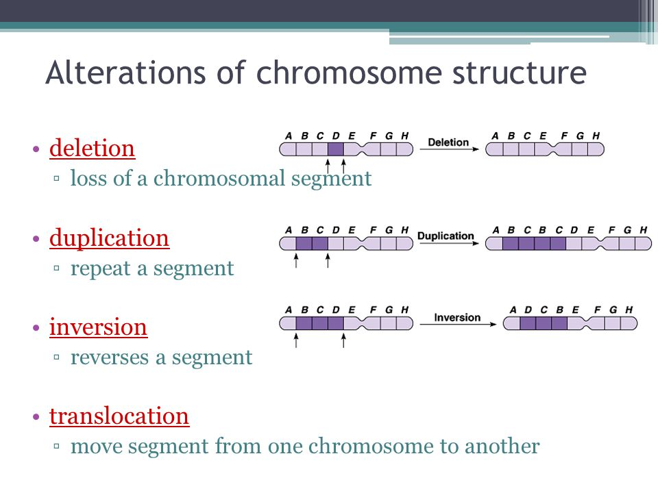 Alterations of chromosome structure deletion ▫loss of a chromosomal segment duplication ▫repeat a segment inversion ▫reverses a segment translocation ▫move segment from one chromosome to another