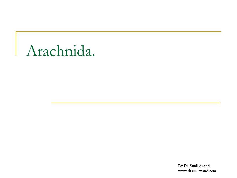 By Dr. Sunil Anand www.drsunilanand.com Arachnida.