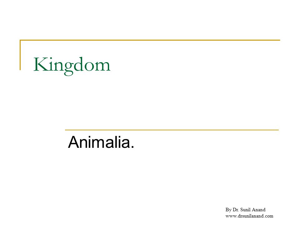 By Dr. Sunil Anand www.drsunilanand.com Kingdom Animalia.