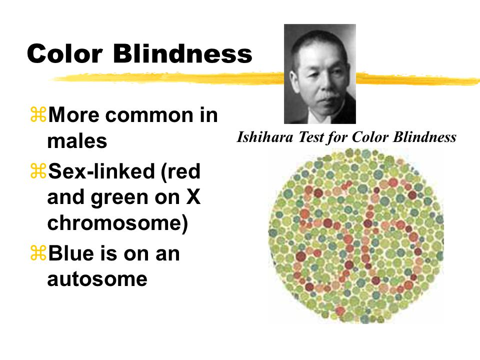Color Blindness zMore common in males zSex-linked (red and green on X chromosome) zBlue is on an autosome Ishihara Test for Color Blindness