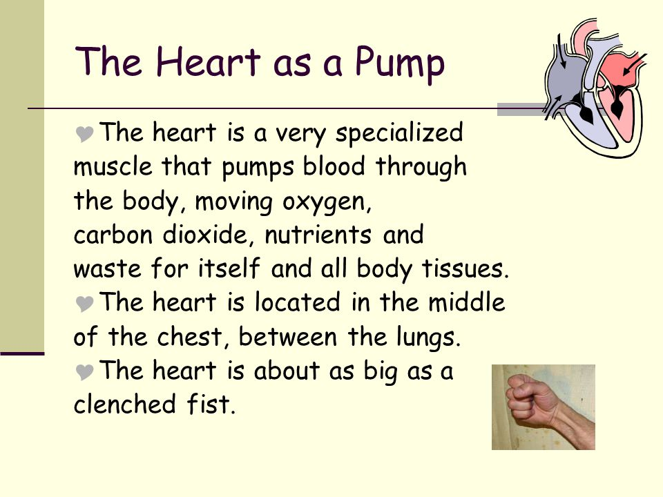 The Heart as a Pump  The heart is a very specialized muscle that pumps blood through the body, moving oxygen, carbon dioxide, nutrients and waste for itself and all body tissues.