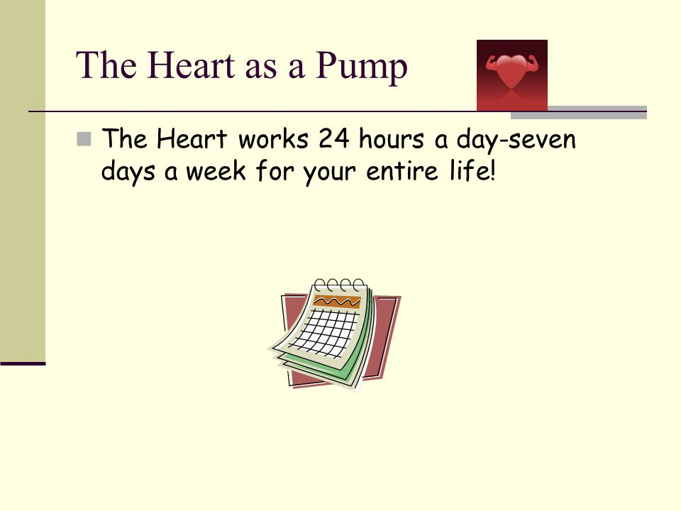 The Heart as a Pump The Human Heart Beats: 100,000 times in one day.