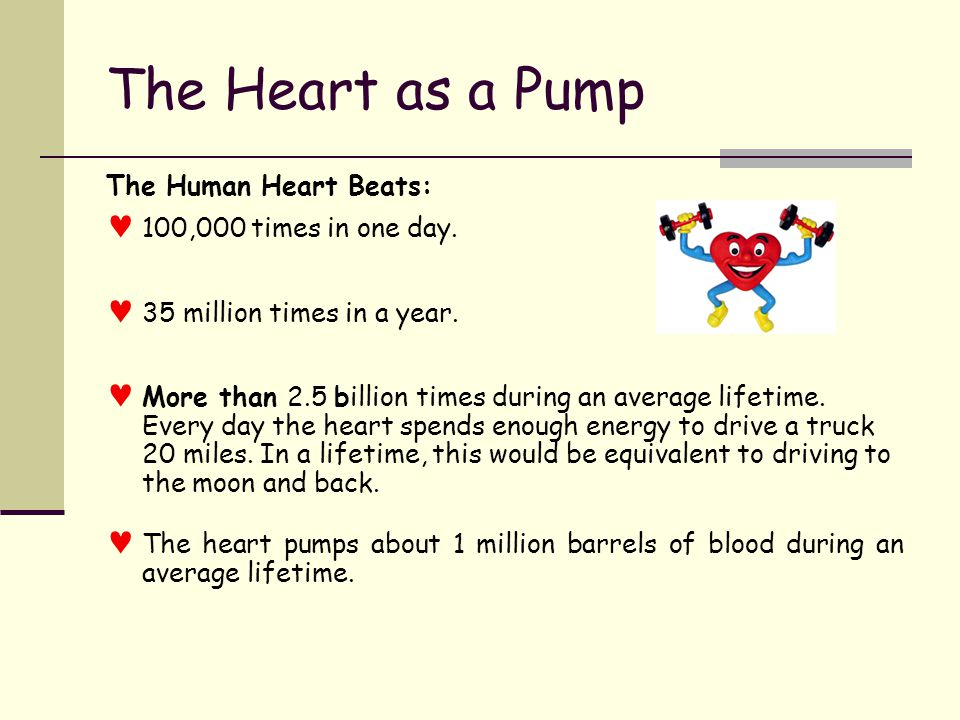The Heart as a Pump every minute The healthy heart pumps about 5 liters of blood through the body every minute