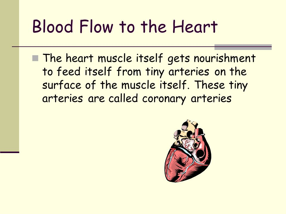 Blood Flow to the Heart Coronary Arteries The Heart has 3 main coronary arteries to carry blood to nourish itself