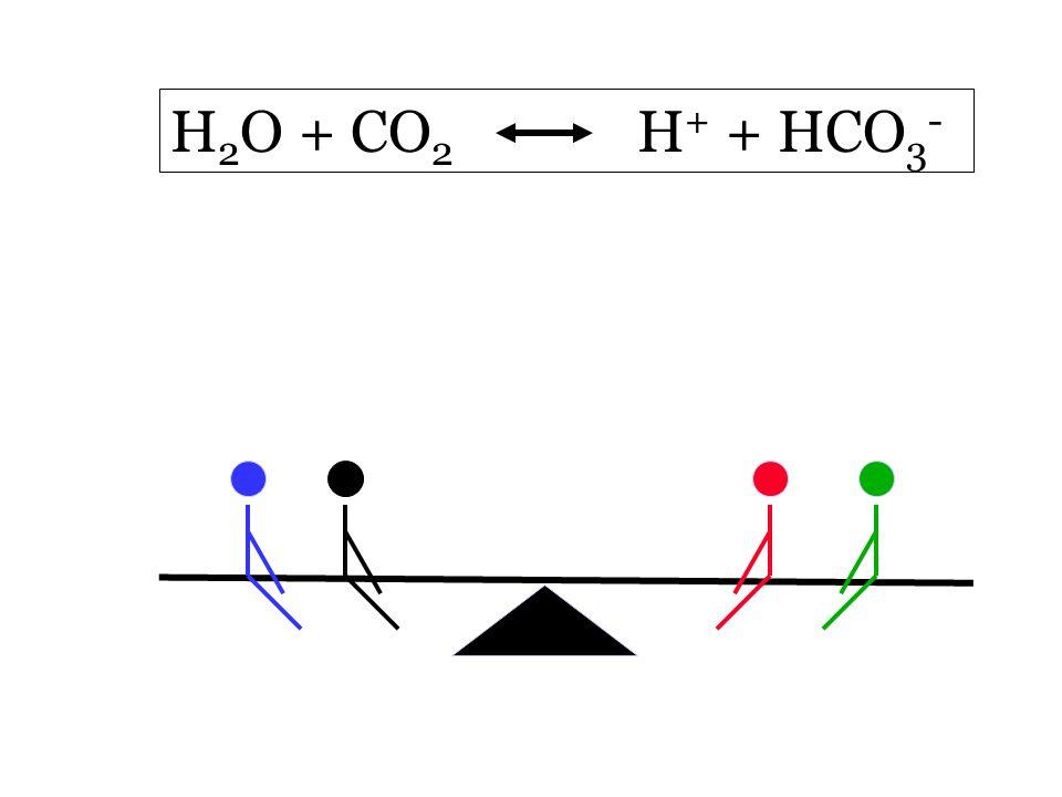 H 2 O + CO 2 H + + HCO 3 -