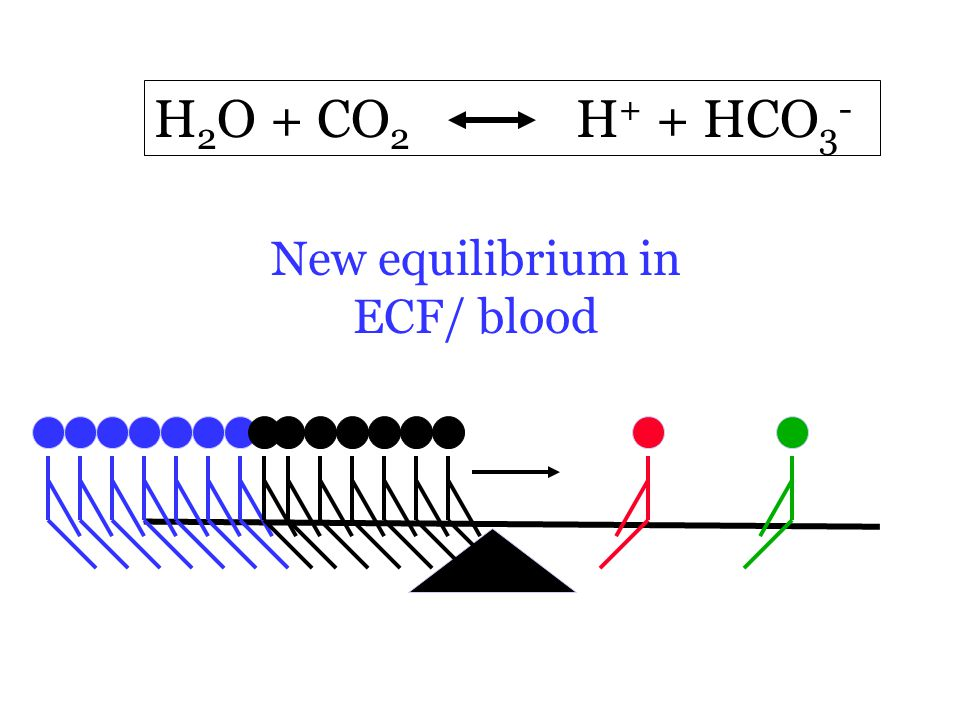 H 2 O + CO 2 H + + HCO 3 - New equilibrium in ECF/ blood