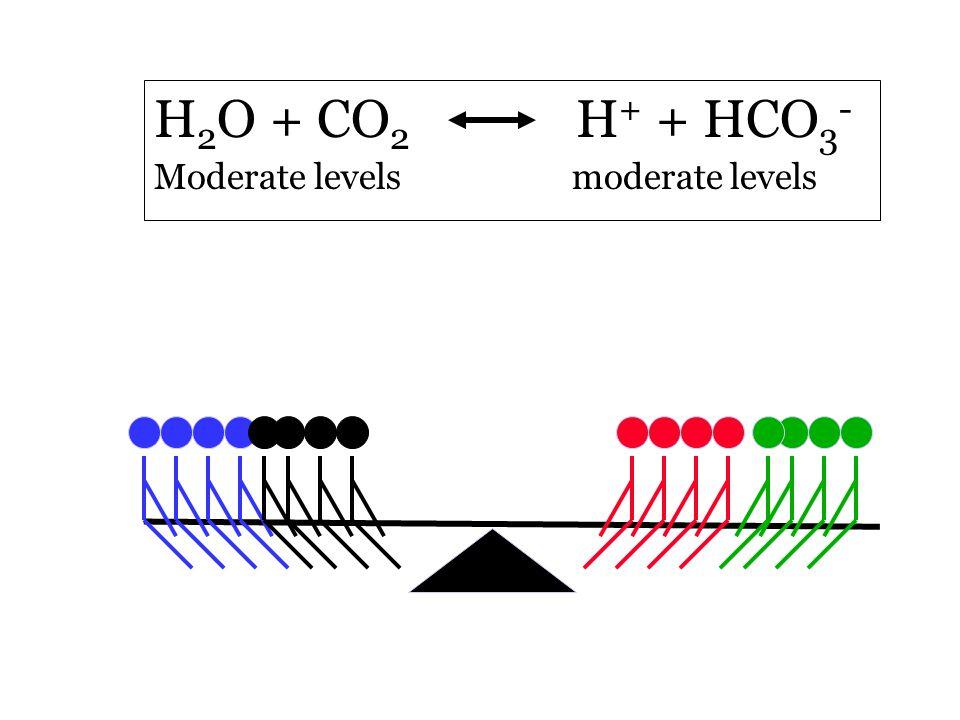 H 2 O + CO 2 H + + HCO 3 - Moderate levels moderate levels
