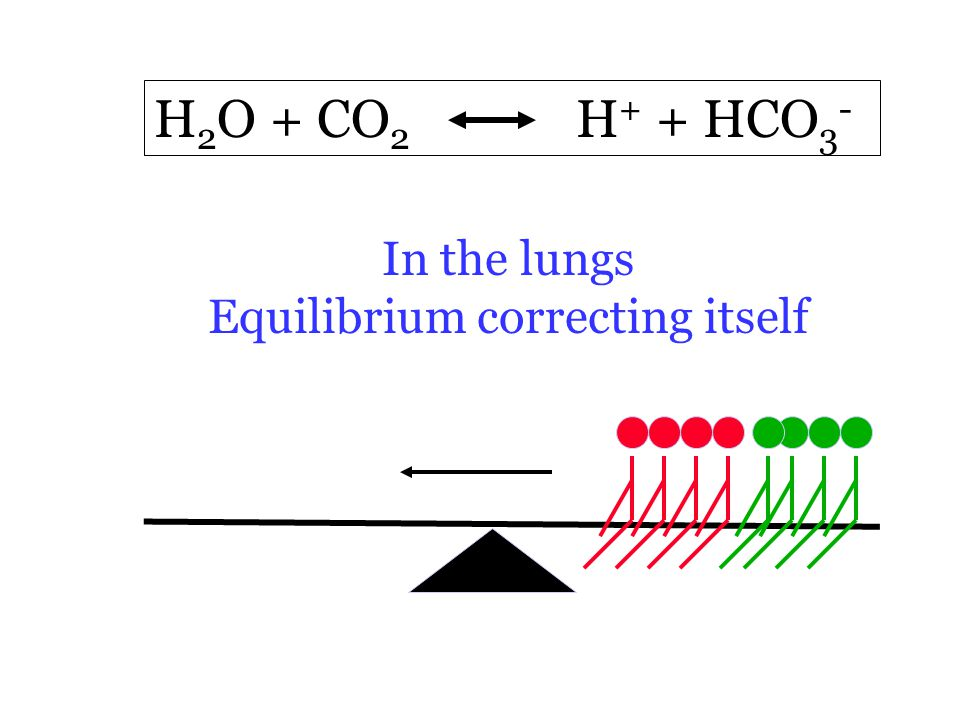H 2 O + CO 2 H + + HCO 3 - In the lungs Equilibrium correcting itself