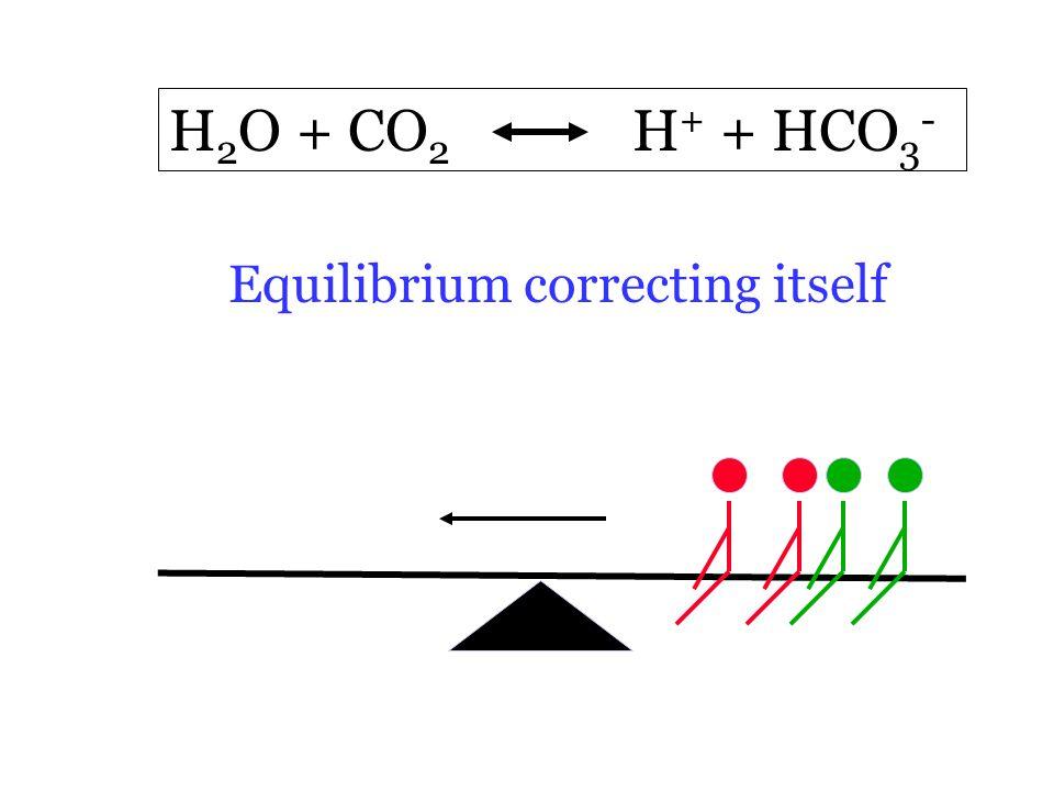 H 2 O + CO 2 H + + HCO 3 - Equilibrium correcting itself