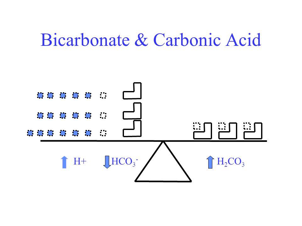 Bicarbonate & Carbonic Acid H+HCO 3 - H 2 CO 3