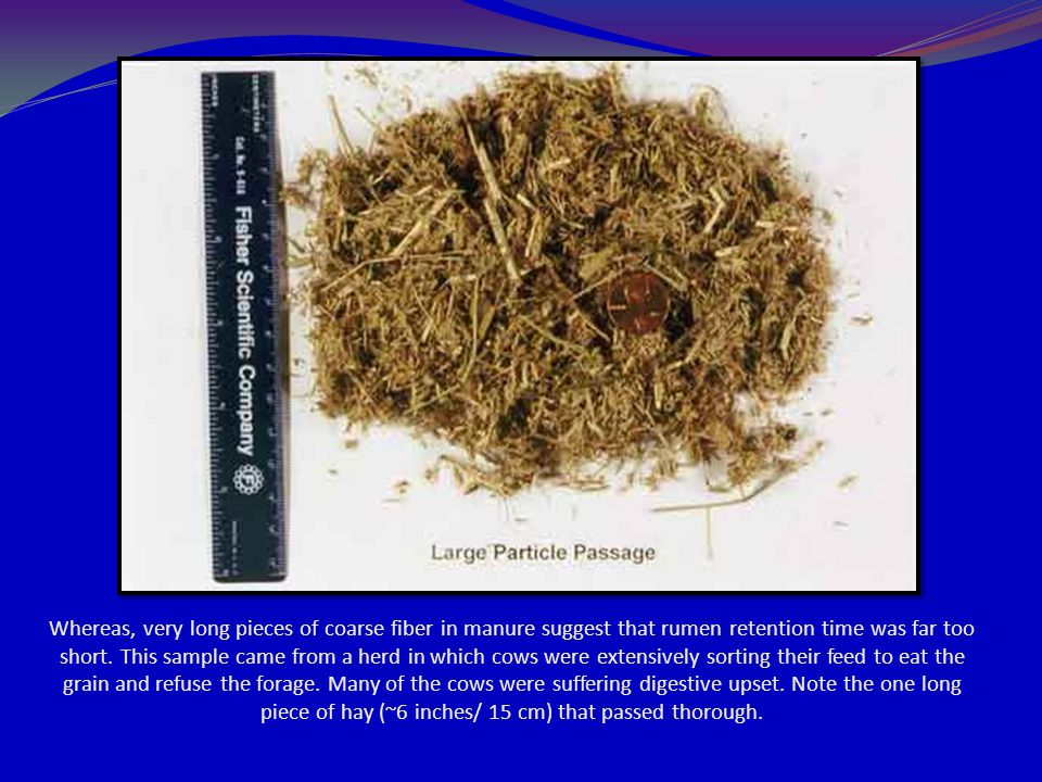 Whereas, very long pieces of coarse fiber in manure suggest that rumen retention time was far too short.