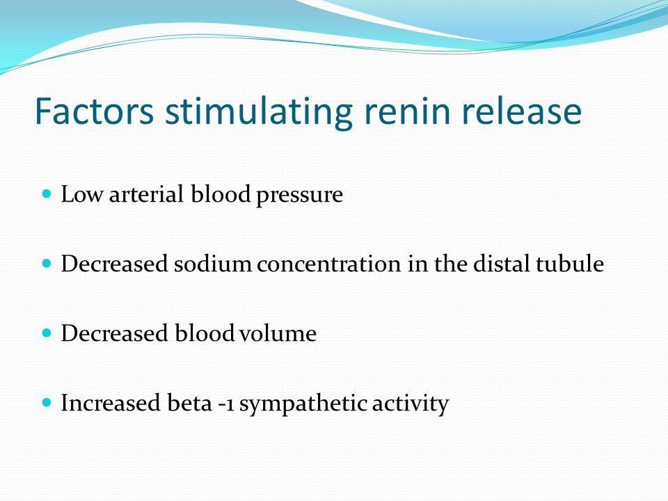 Factors stimulating renin release Low arterial blood pressure Decreased sodium concentration in the distal tubule Decreased blood volume Increased bet