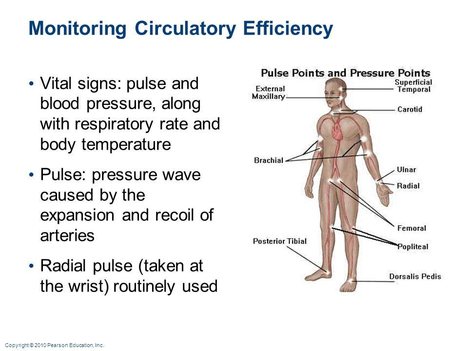 Copyright © 2010 Pearson Education, Inc. Monitoring Circulatory Efficiency Vital signs: pulse and blood pressure, along with respiratory rate and body