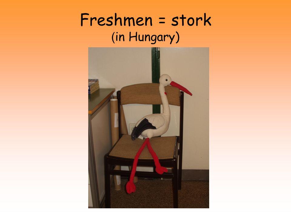 Freshmen = stork ( in Hungary)