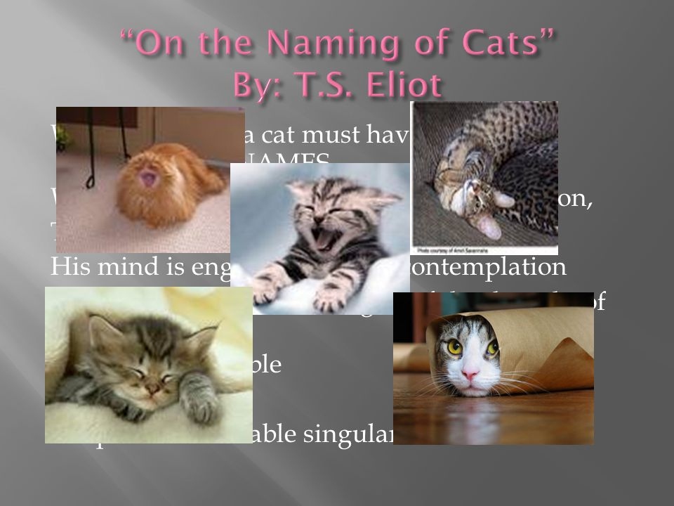When I tell you, a cat must have THREE DIFFERENT NAMES When you notice a cat in profound meditation, The reason, I tell you, is always the same: His m